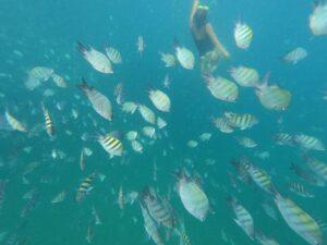 Mergulho com passeio de barco - Jipe Aventura Turismo